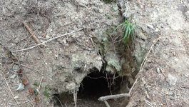 Photo of a large hole in a hillside with roots poking out.