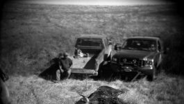 The carcass of a buffalo lies on the ground in front of two pickup trucks. A man sits on the bed of one of the trucks.