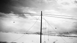 A pole carrying electric lines stands on snow covered ground, while two birds fly in the otherwise blank background.