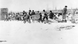 A group of boys are cutting and handling logs in assembly line fashion.