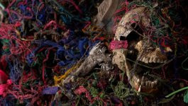 A skull covered in colorful threads lies in a mass grave.