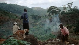 A man stands on a rock, looking out at the hillside above Freetown. Another man and a dog sit by his side.