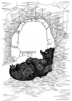 Bear sleeping in cave.