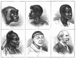 Late nineteenth century chart showing six images displaying the supposed stages of racial evolution, beginning with an ape and ending with a European man.